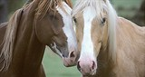 Equine Herpes Virus type 1 and 4 Discriminating Test (EHV1/EHV4-Ab)